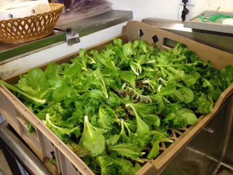 Freshly picked salad greens donated by Urban Oaks Organic Farm, M. T. Rutkowski Farm and Roger Phillips Farm