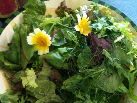 Freshly picked spring greens with edible chrysanthemums and garlic scape vinaigrette.
